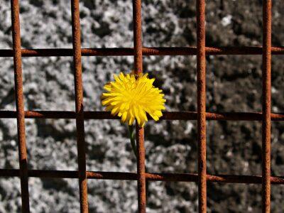 Widerstand und Solidarität - Die politische Spiritualität von Simone Weil