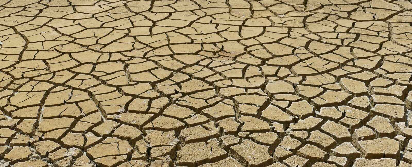 WebTalk: Armut und Klimawandel gemeinsam bekämpfen?